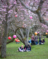 Hanami Botaniska april 2016-2